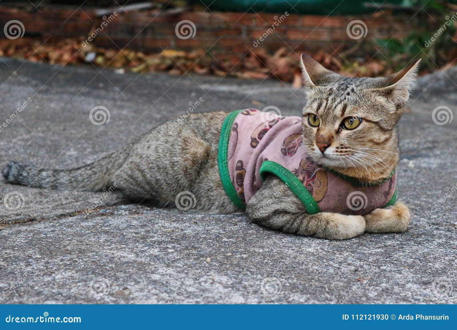 Close Up Image Of A Cute Cat