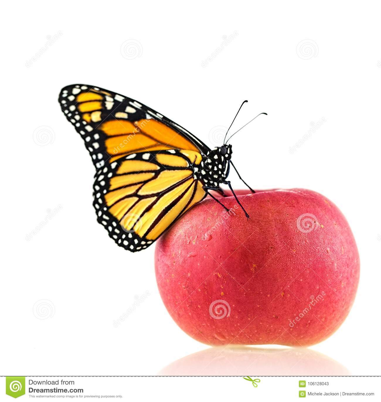 A Monarch Butterfly On An Apple