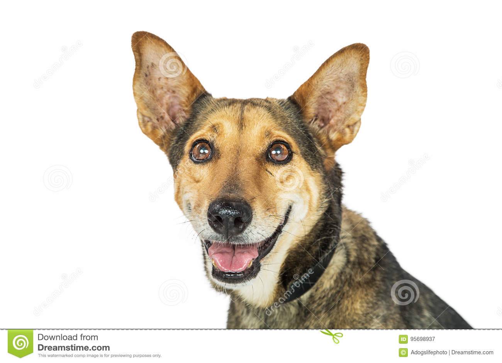 Close up isolado de sorriso do cão feliz