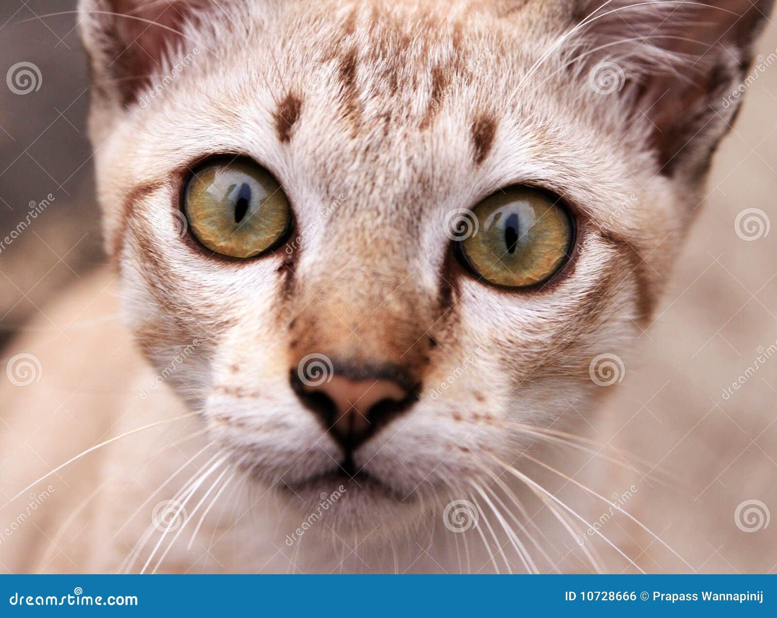 close-up-kitten-eyes-10728666.jpg