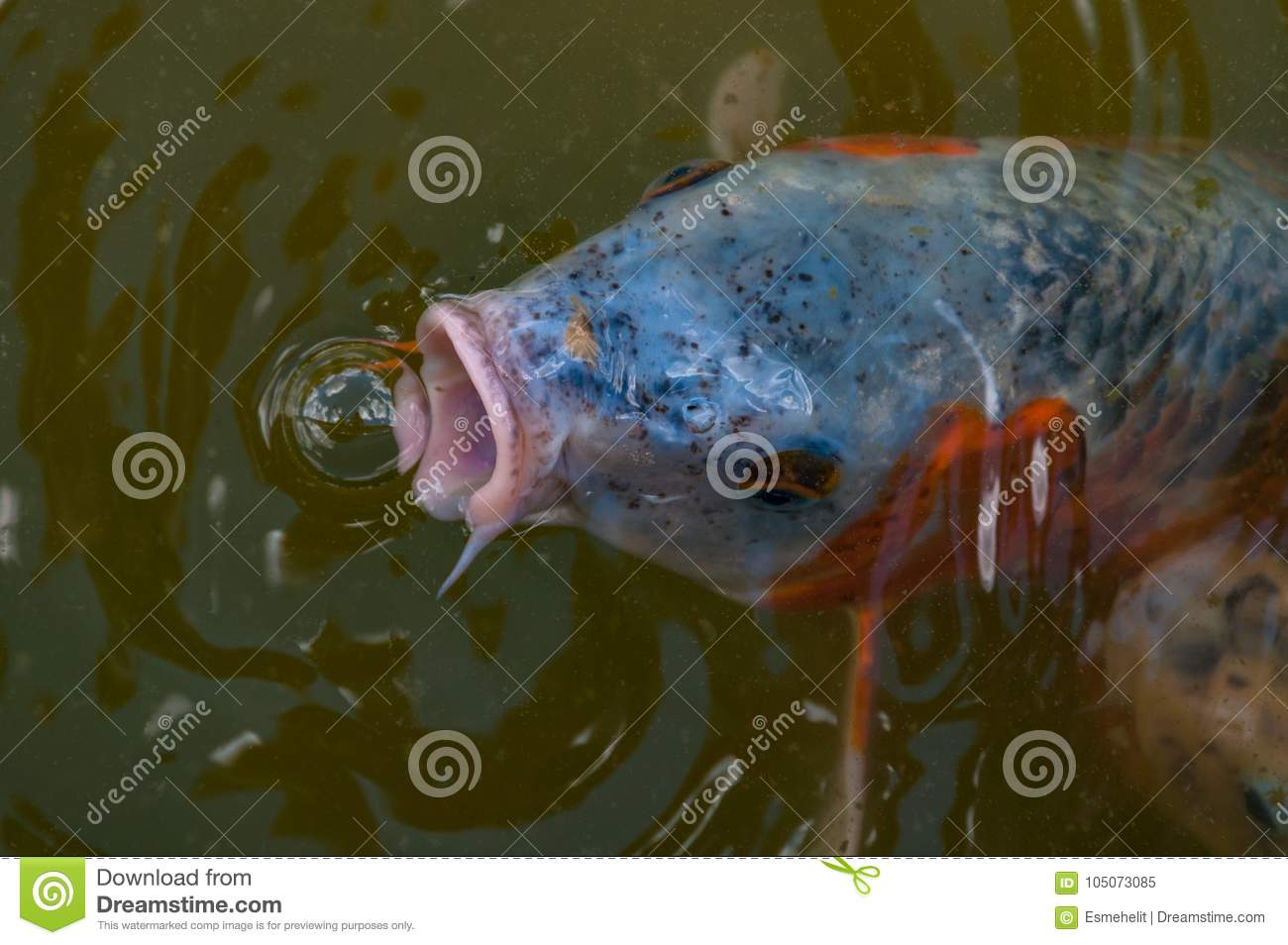 Discussion on this topic: How to Open or Close a Fish , how-to-open-or-close-a-fish/