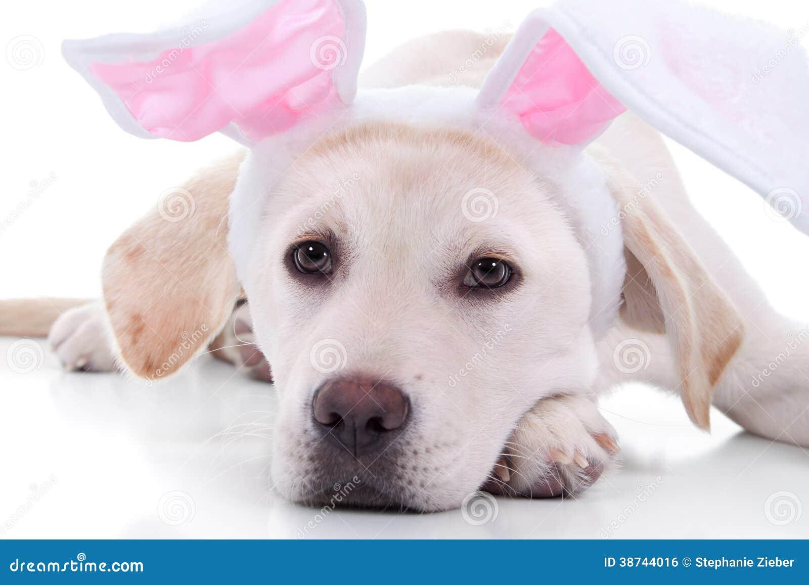 easter bunny dog royalty free stock image image 38744016