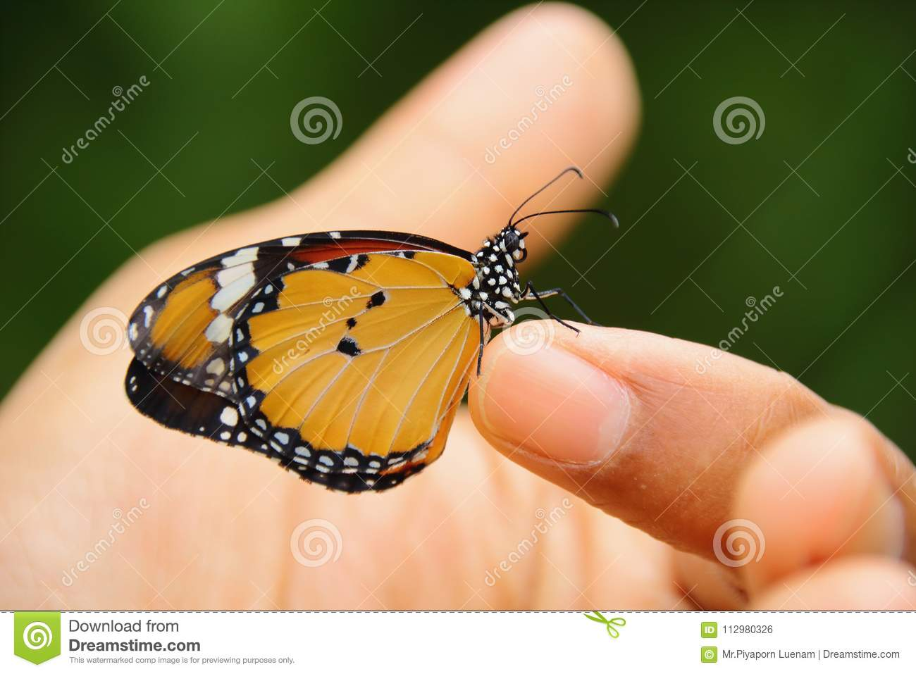 Butterfly on the finger. insects,