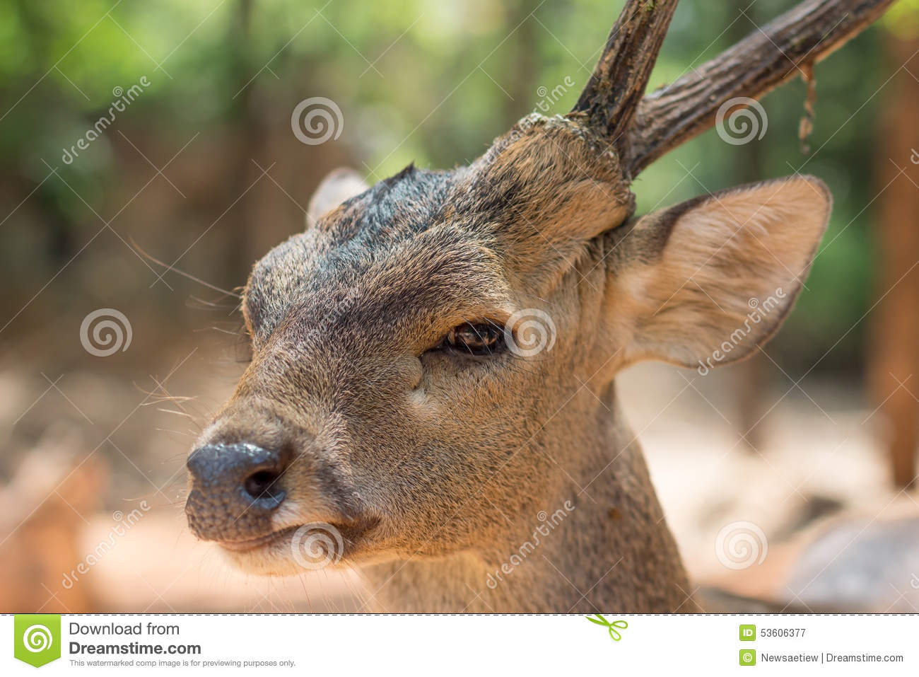 single horned deer