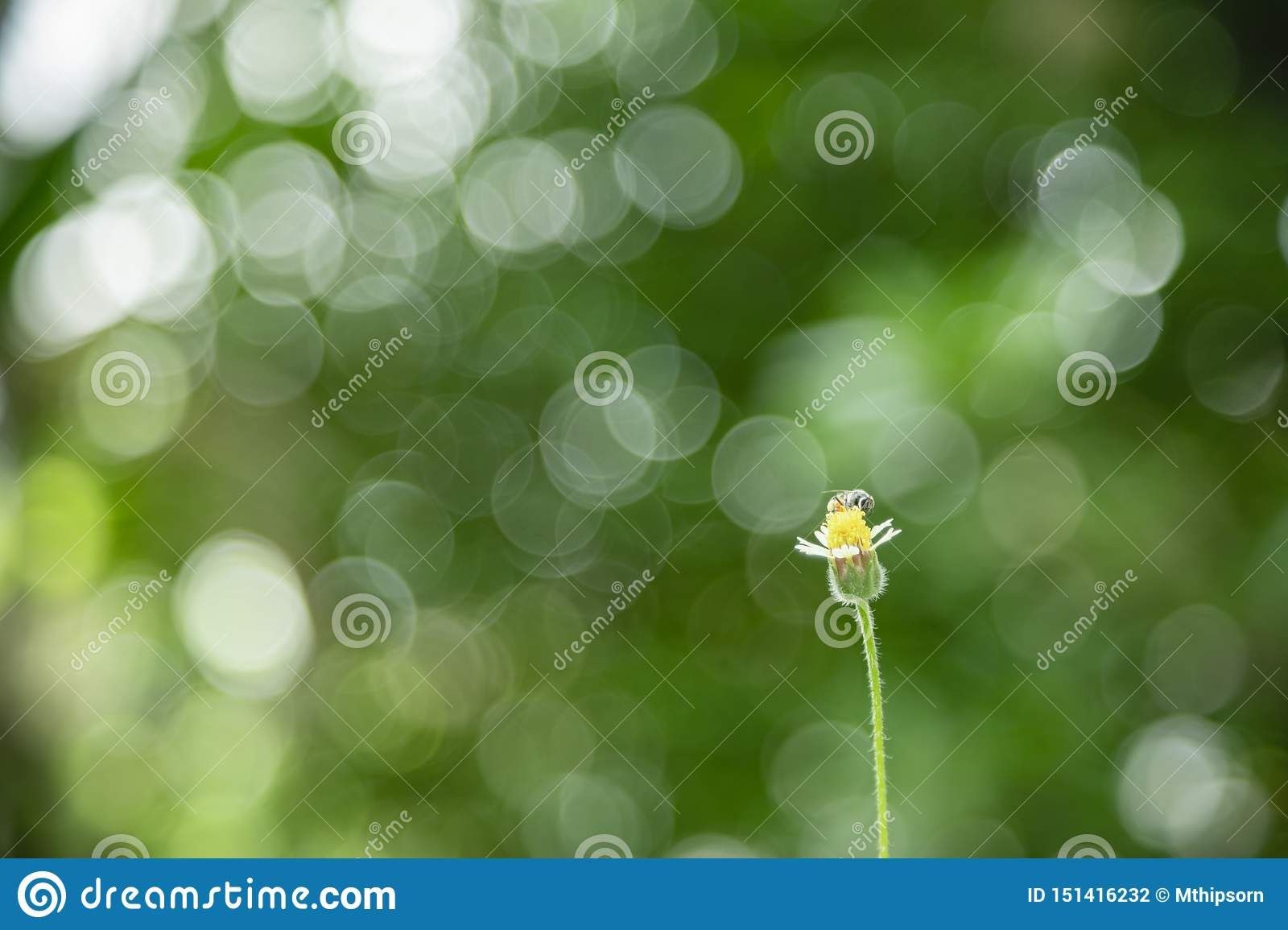 Close up of little flower and bee with green leaf nature blurred and light bokeh background