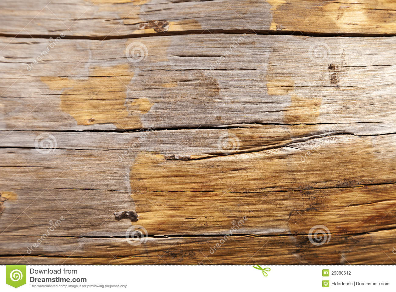 Tree Trunk Close Up Stock Photography - Image: 29880612