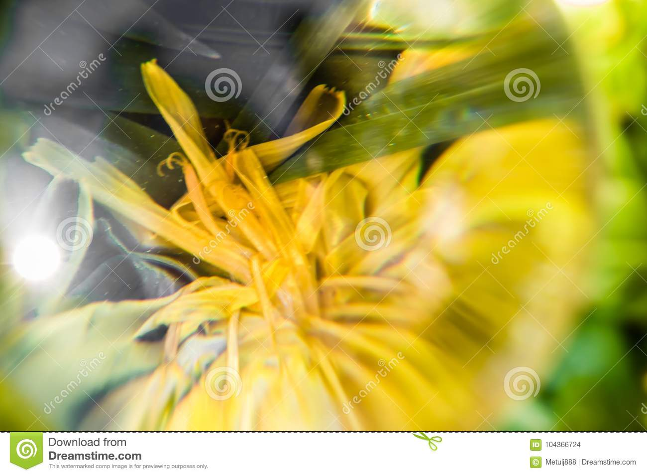 Close Up Macro View Through Lens Ball Of Yellow Flower Petals In