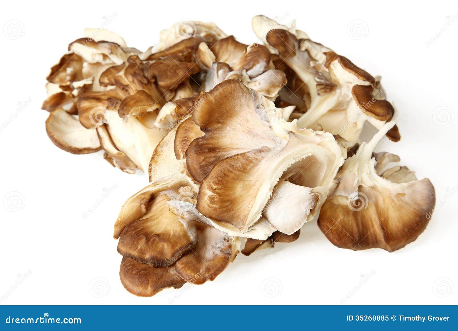 Close Up Of Maitake Mushrooms