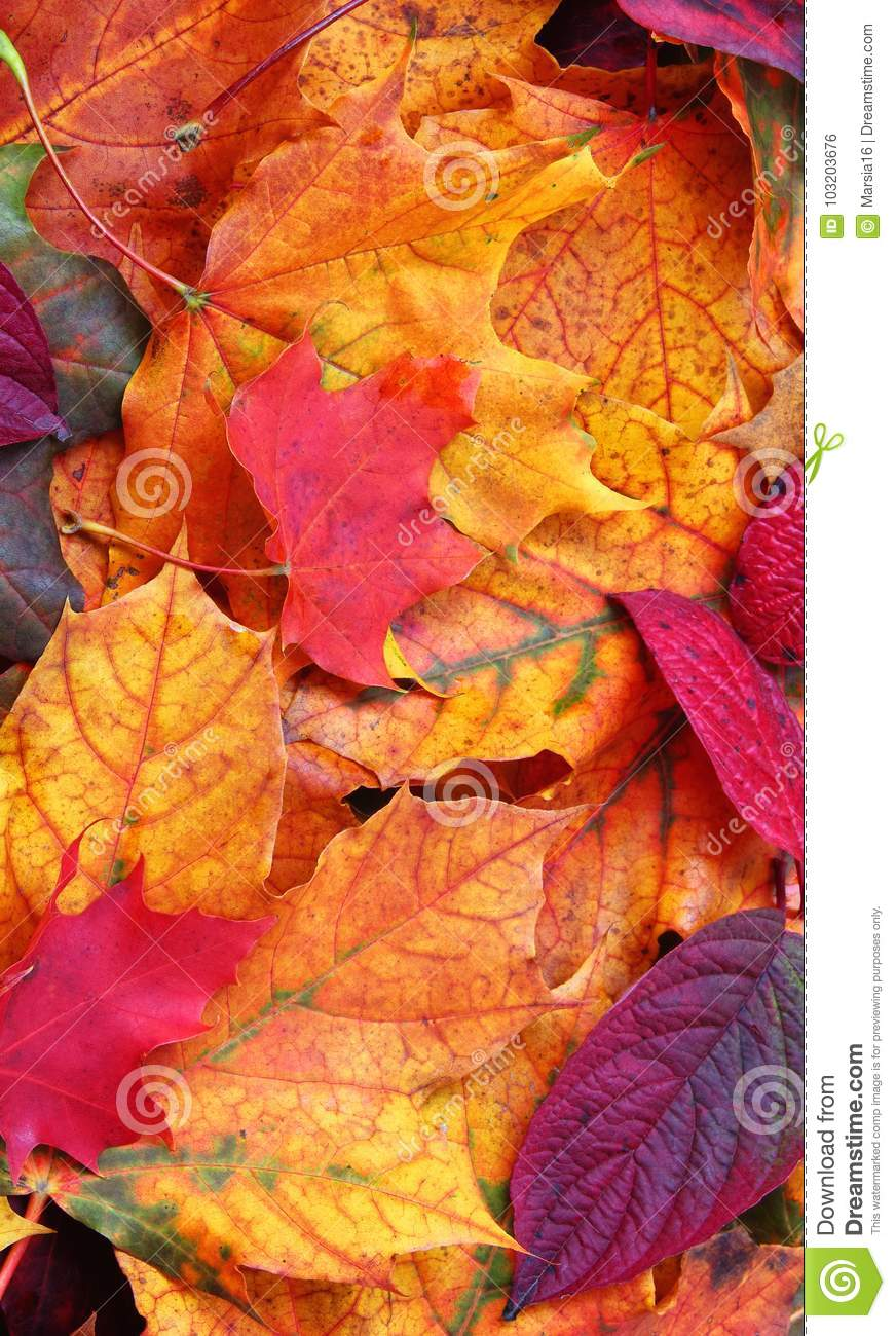 Autumn Leaves. Mobile Phone Wallpaper.
