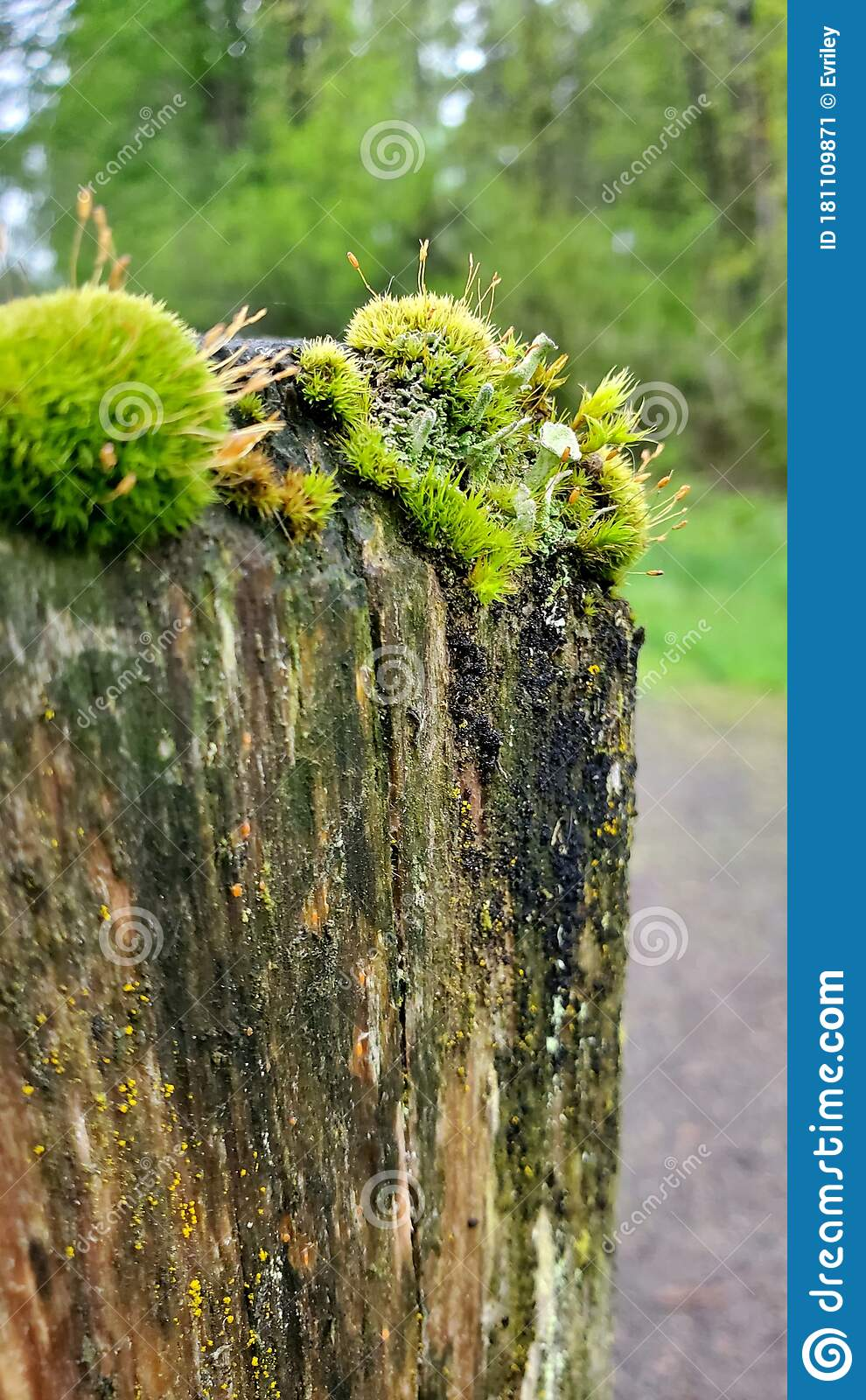 Picture of: Close Up Of Moss And Other Plants On Top Of A Cedar Fence Post 2 Stock Image Image Of Close Plants 181109871