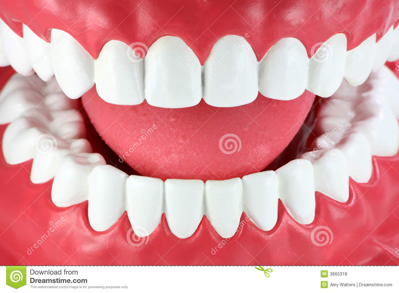 Close-up Of A Mouth With Clean White Teeth Royalty Free Stock Photos ...