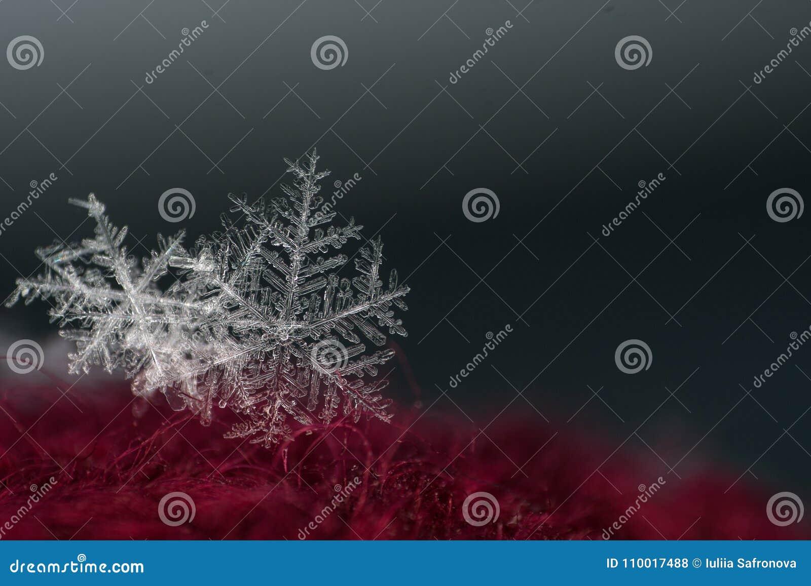 Close-up natural do floco de neve inverno, frio