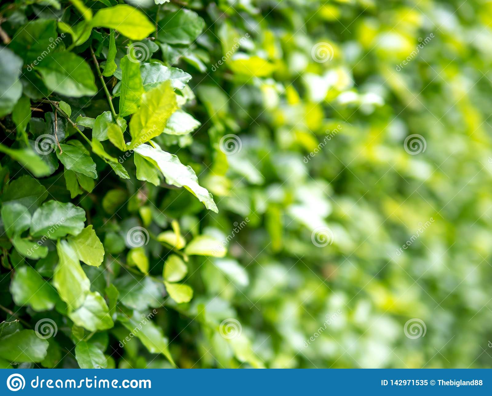 Close Up Nature View Of Green Leaf On Blurred Greenery