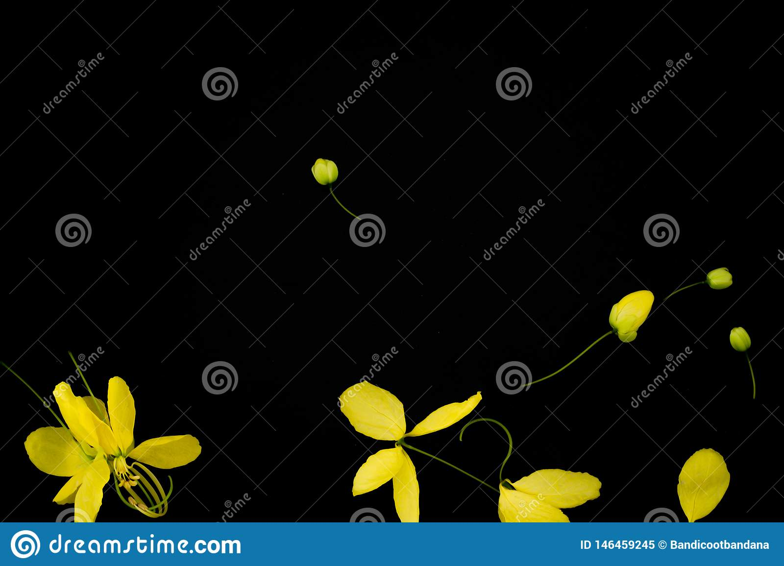 Close up nature Yellow flower black background taxture and wallpeper