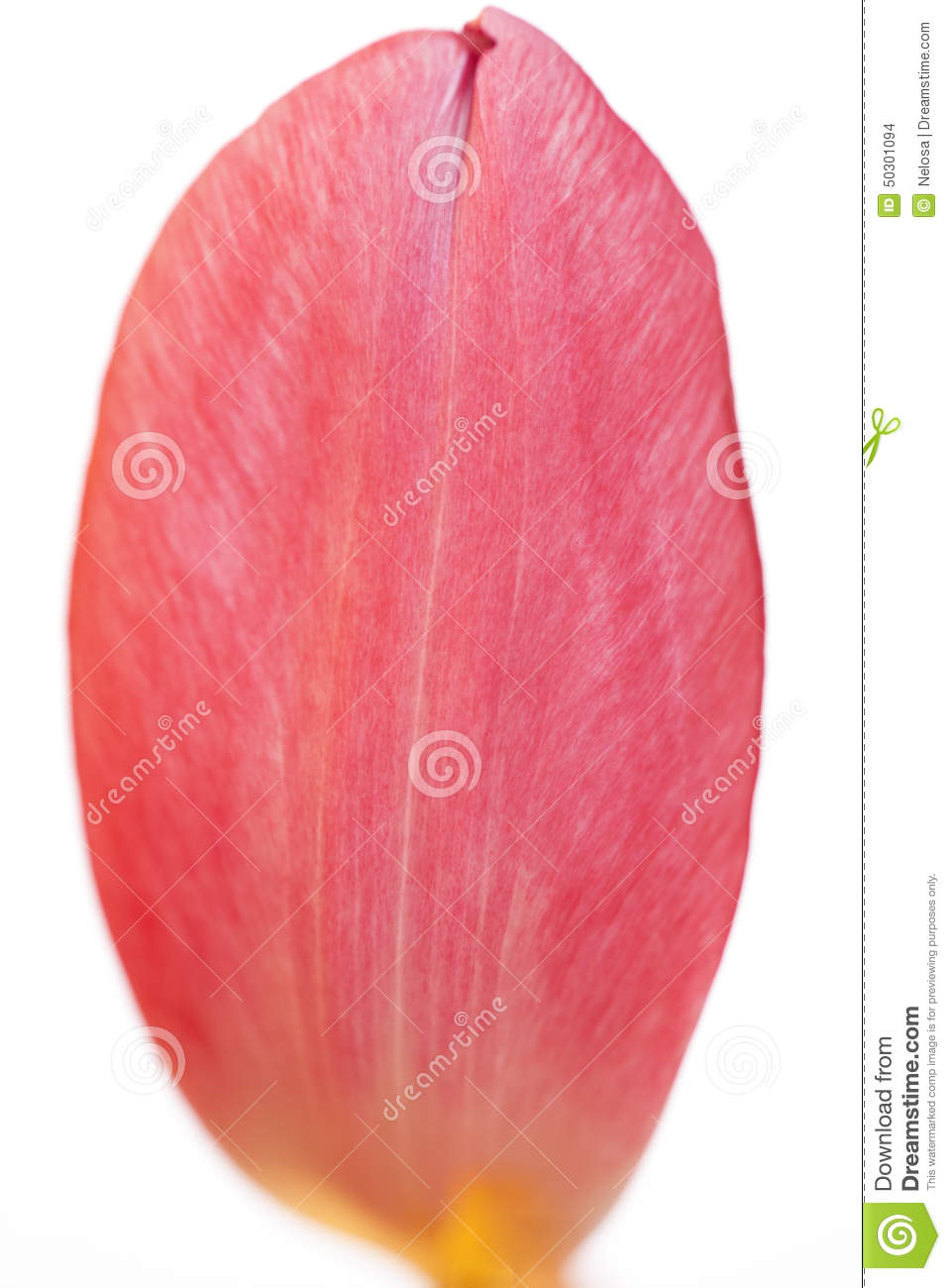 Petal Dream Off Hair Beauty Beauty Advertising Poster: Close Up Of One Tulip Petal Stock Photo