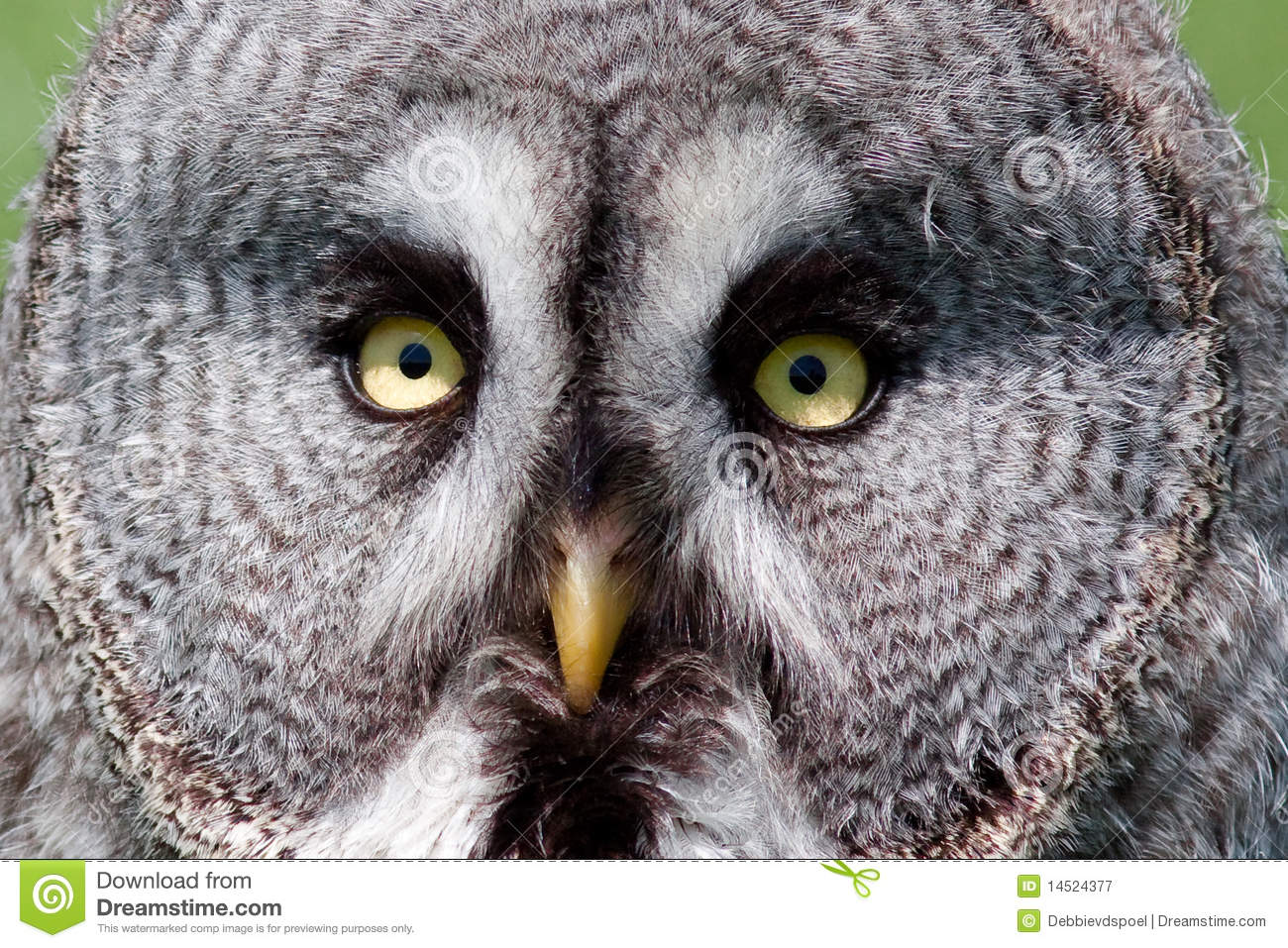 Close-up of owl eyes s...