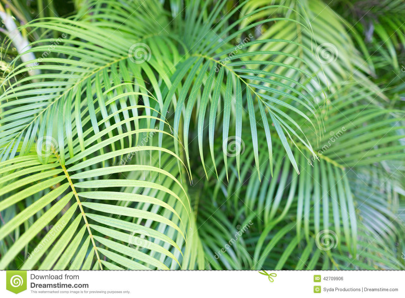 Close-up Of Palm Tree Leaves Stock Photo - Image of palm ... - photo#33