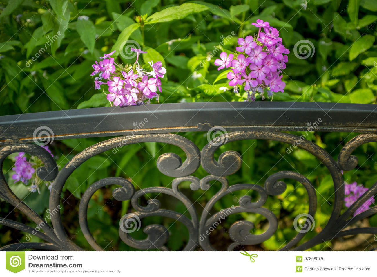 Fabulous Close Up Of Park Bench And Purple Flowers In A Garden Stock Machost Co Dining Chair Design Ideas Machostcouk
