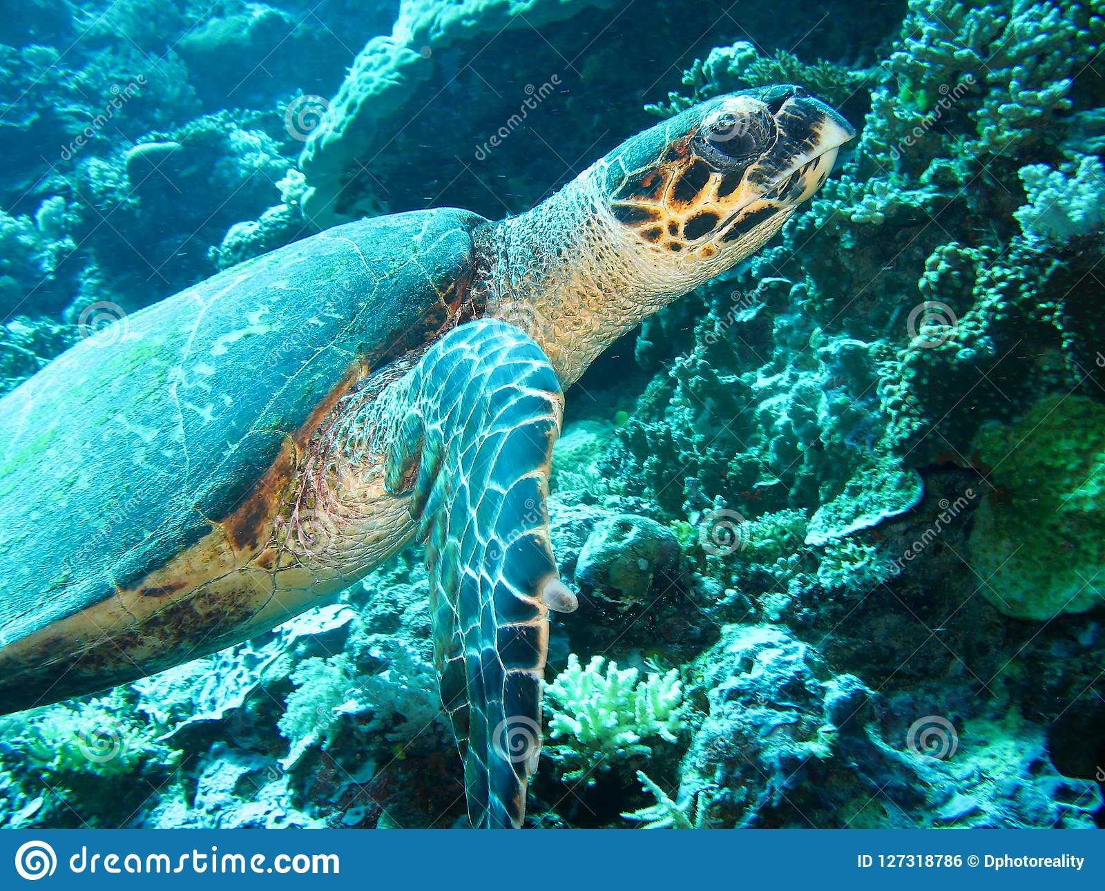 - Close Up Photo Of A Sea Turtle. The Photo Is In Yellow And Blue