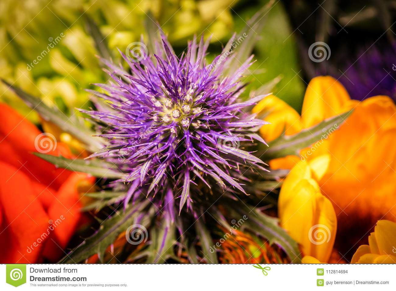 Close up photography on a flower in a bouqet