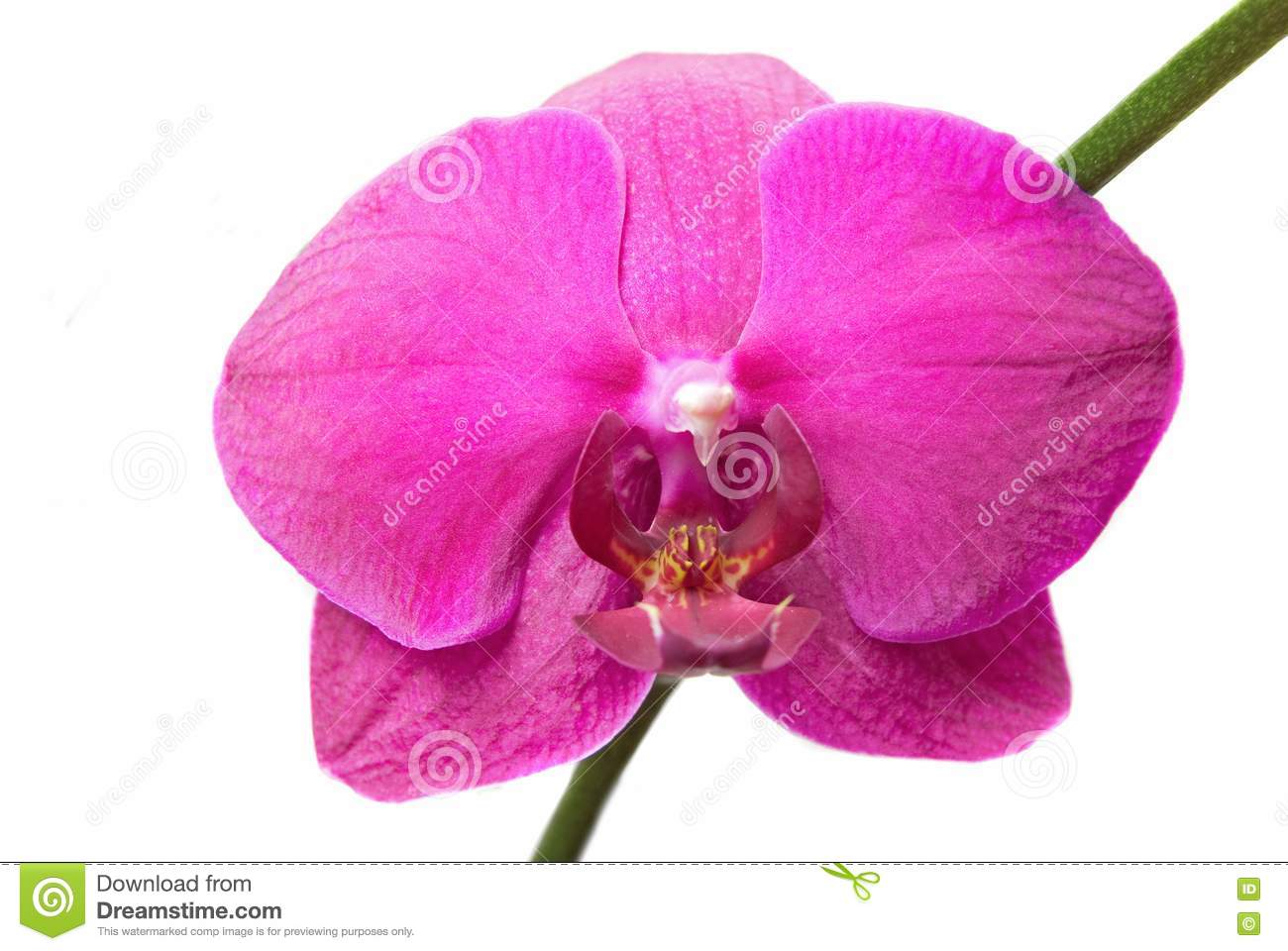pink orchids close up - photo #7