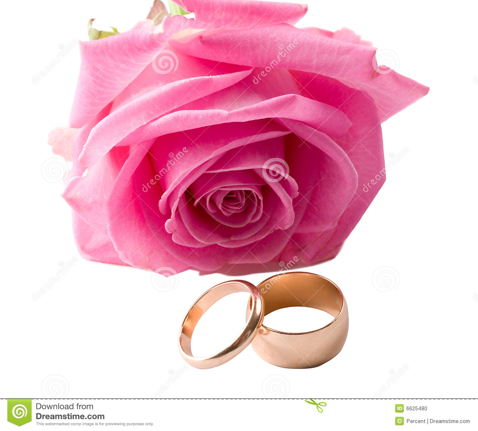 royalty free stock image two wedding rings pink rose flower image pink wedding rings Close up pink rose and two wedding rings Stock Photo