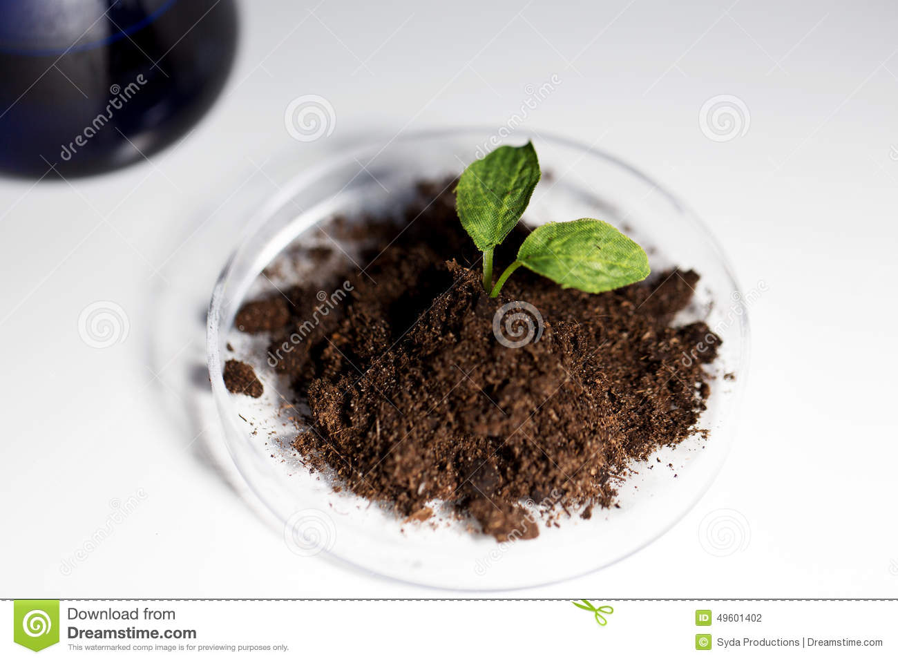 Close up of plant and soil in lab stock photo image for Soil and plant lab