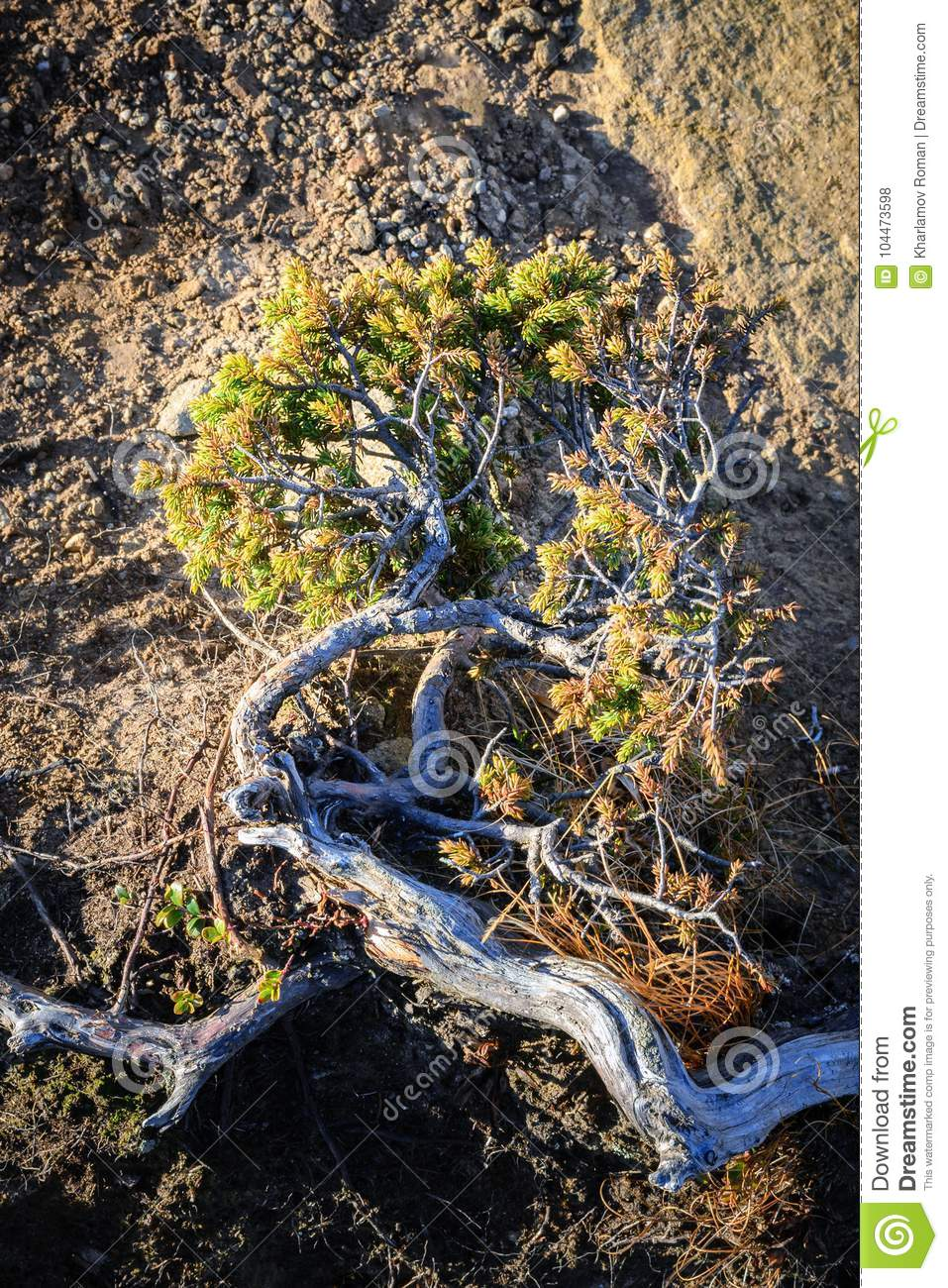 Close-up of a plant that survives in the harsh mountainous terrain in the morning sun