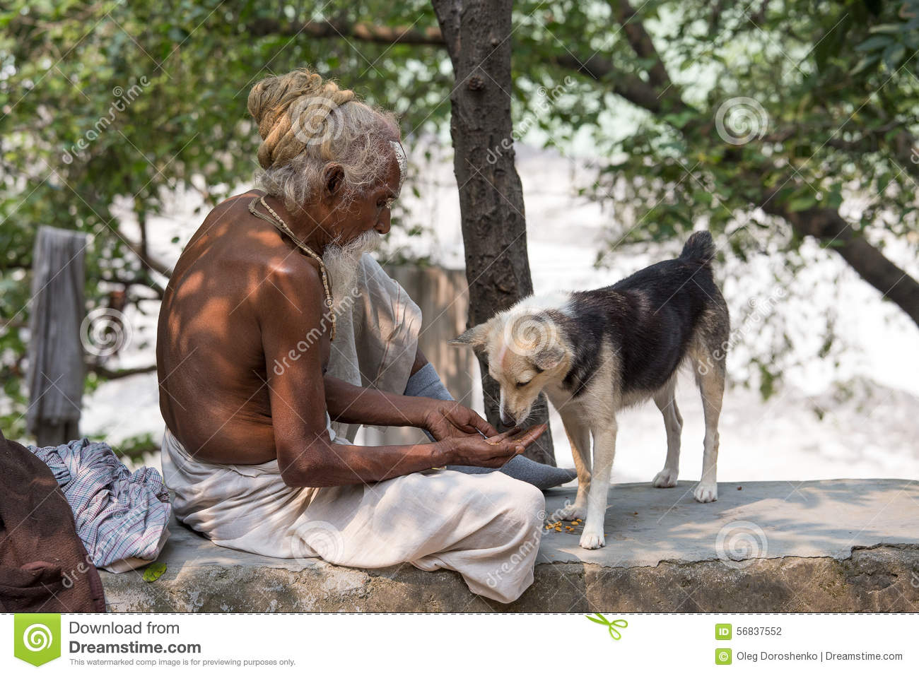Image result for INDIAN BEGGAR DOG