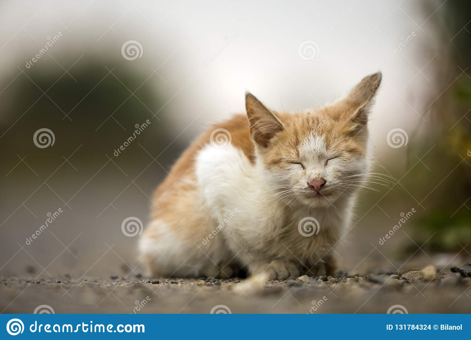 Close-up portrait of funny cute adorable ginger small white young cat kitten with closed eyes sitting dreaming sleeping outdoors