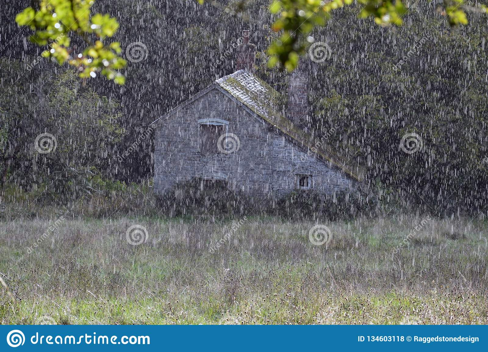 A close up of rain falling on a meadow with a beautiful abandoned mill. Knapp and Papermill, Worcestershire, UK