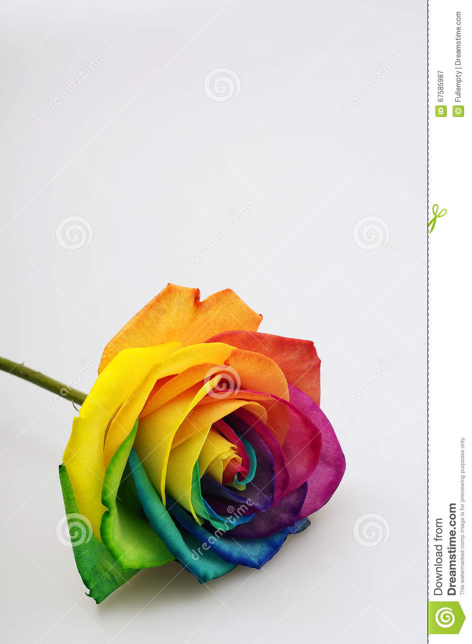 Close up of rainbow rose heart royalty free stock for Multi colored rose petals