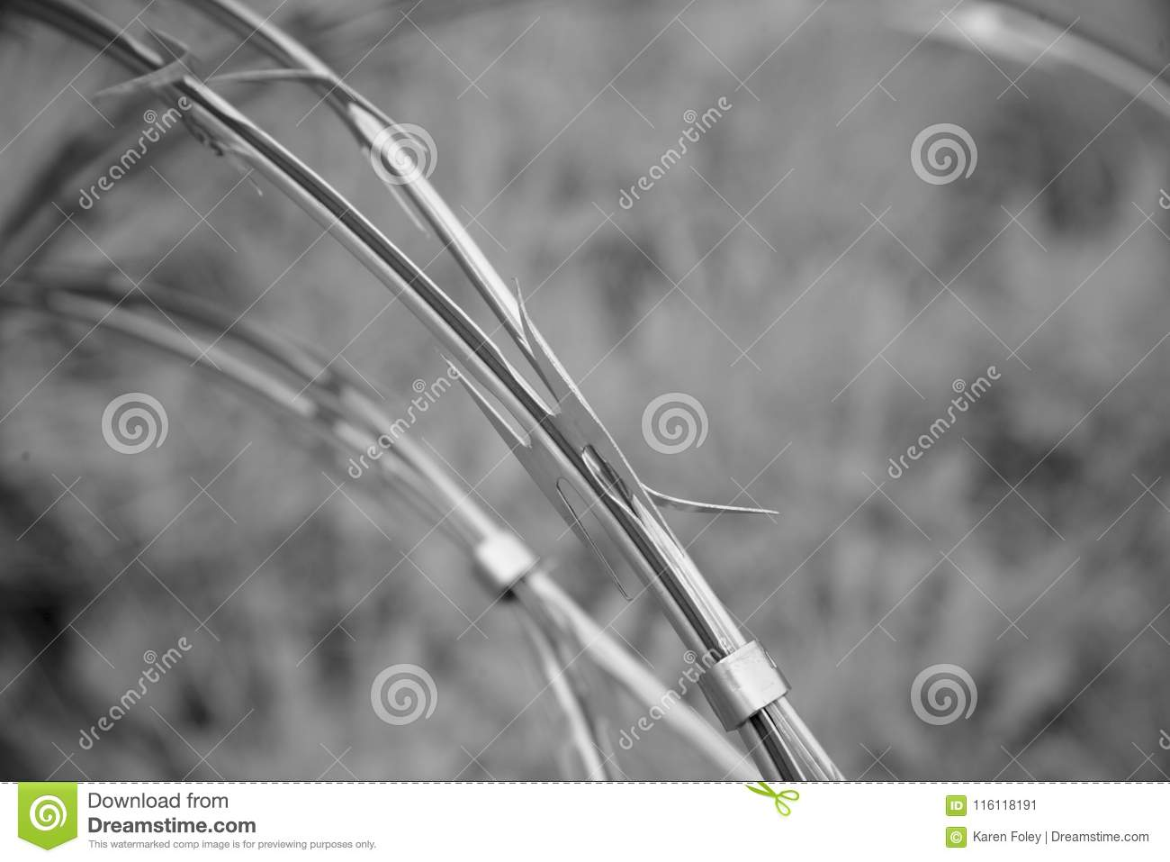 Black and white razor wire stock image. Image of coil - 116118191
