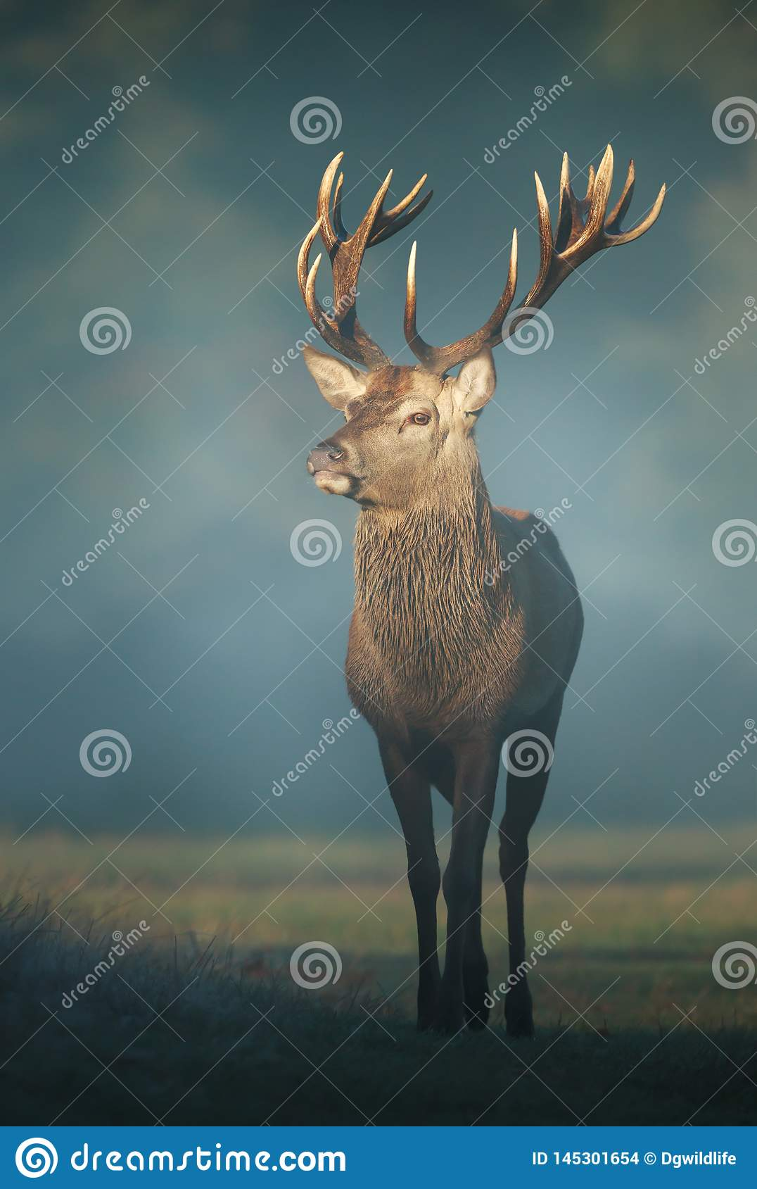 Red deer stag on a misty autumn morning