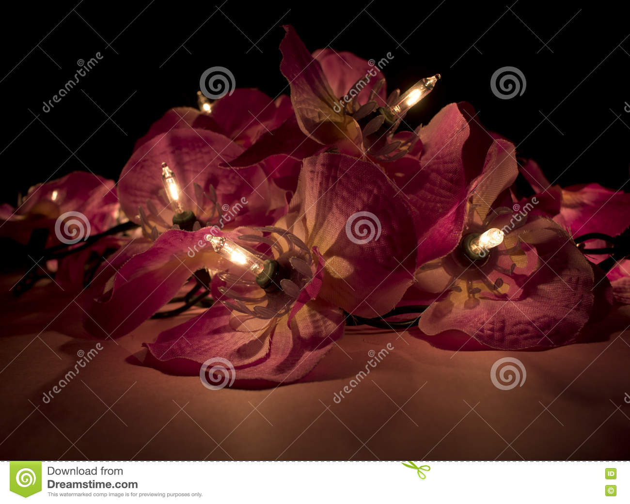 Close Up Of Red Flower Fairy Lights In The Dark Stock Image Image