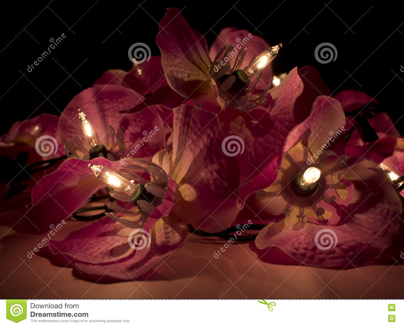 Close Up Of Red Flower Fairy Lights In The Dark Stock Photo Image