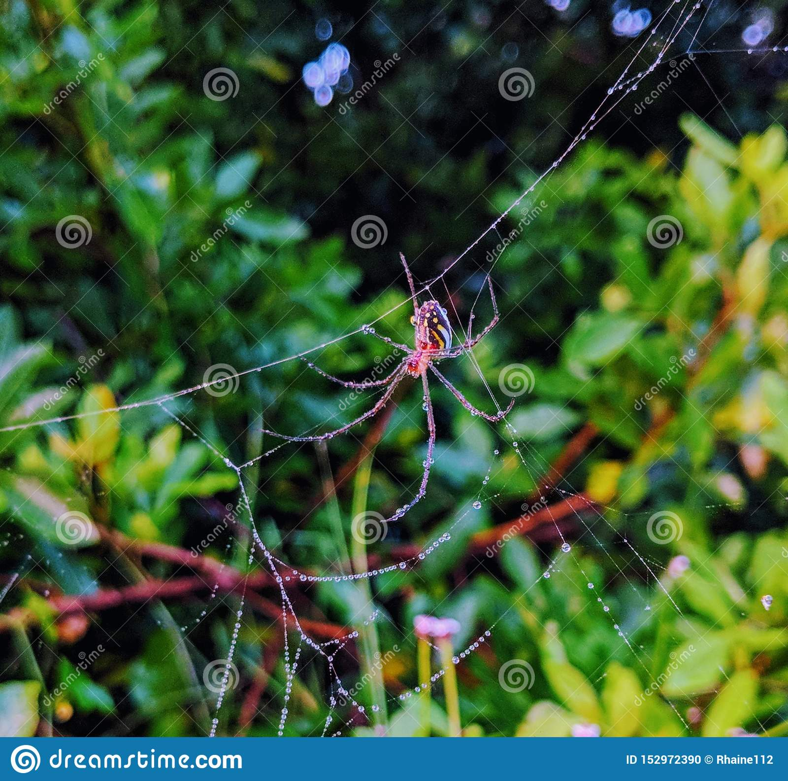 Close-up of red spider on web