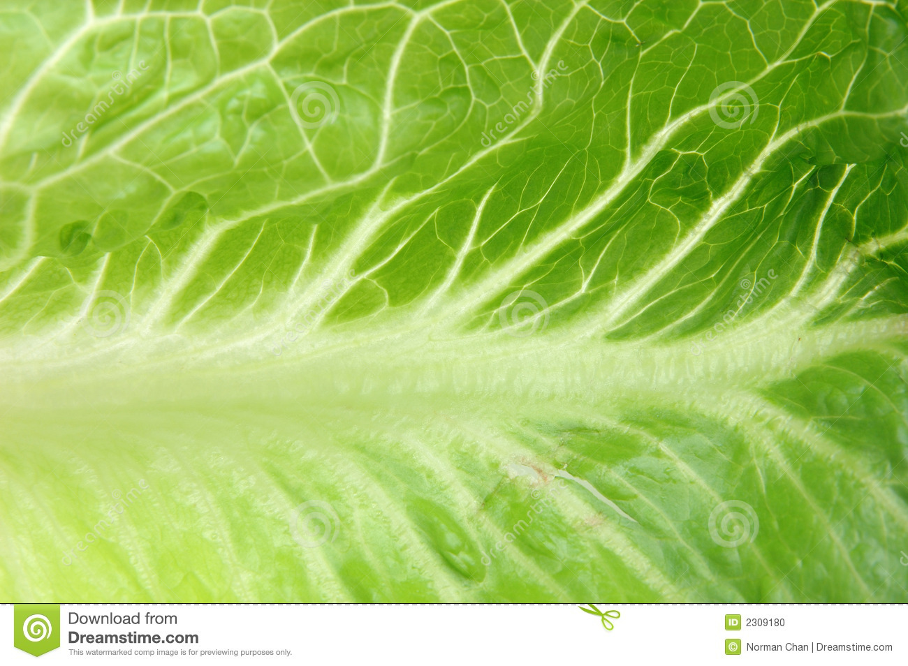 Close Up Of Romaine Le...
