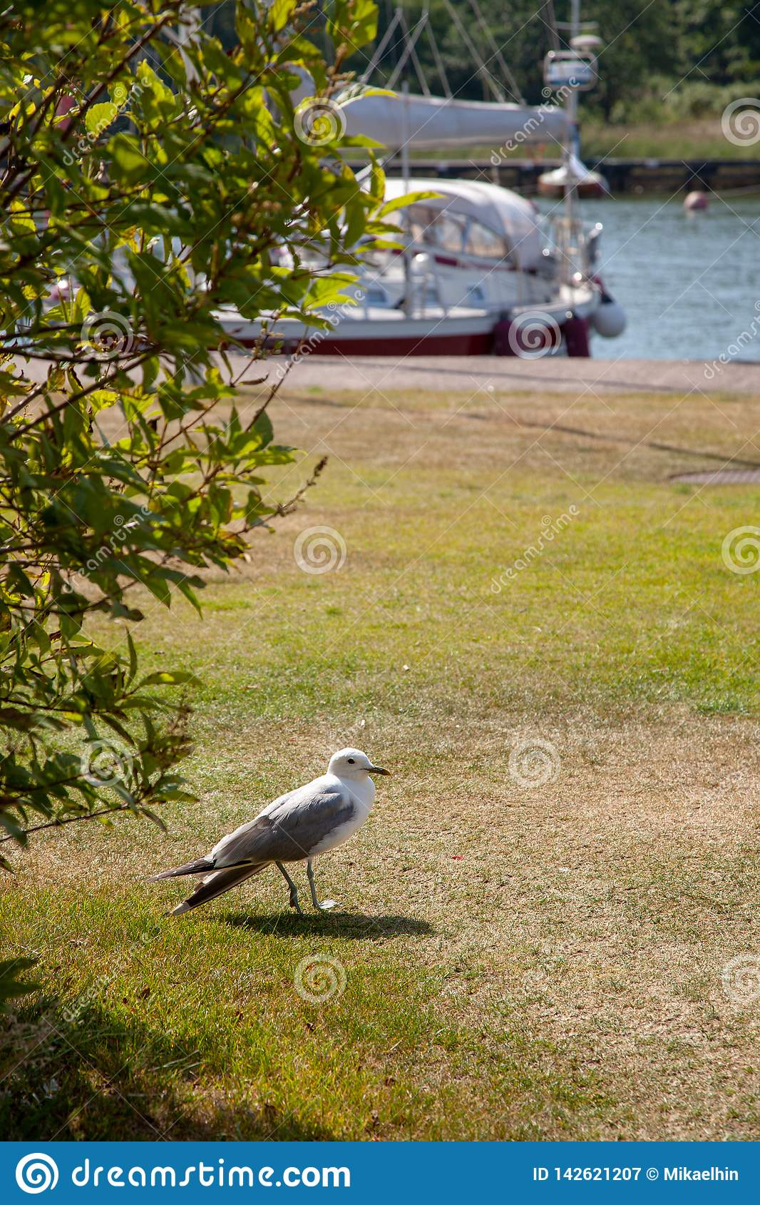 Close up of seagull standing on a lawn.