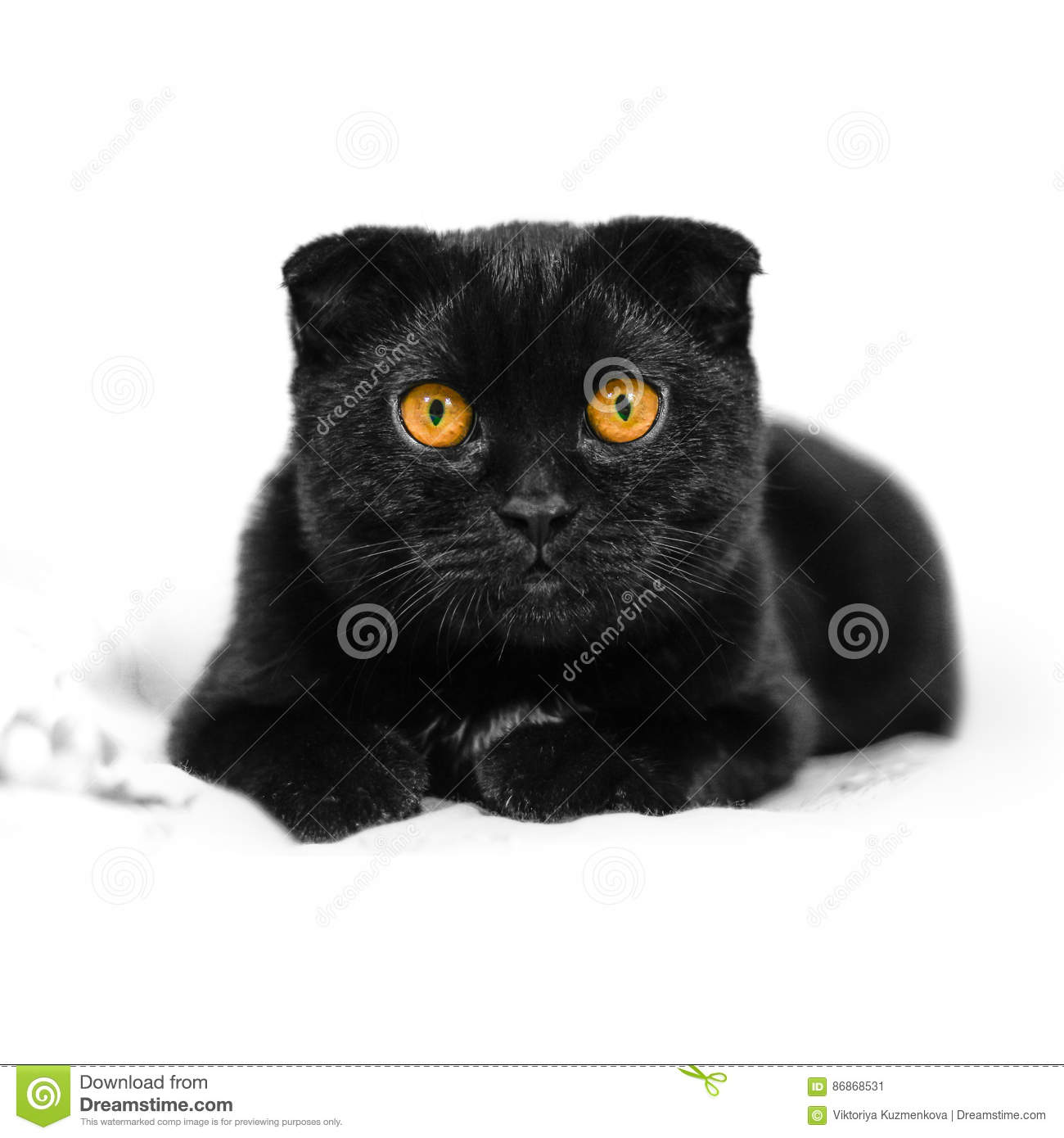 Close-up serious black Cat with Yellow Eyes in Dark. Face black