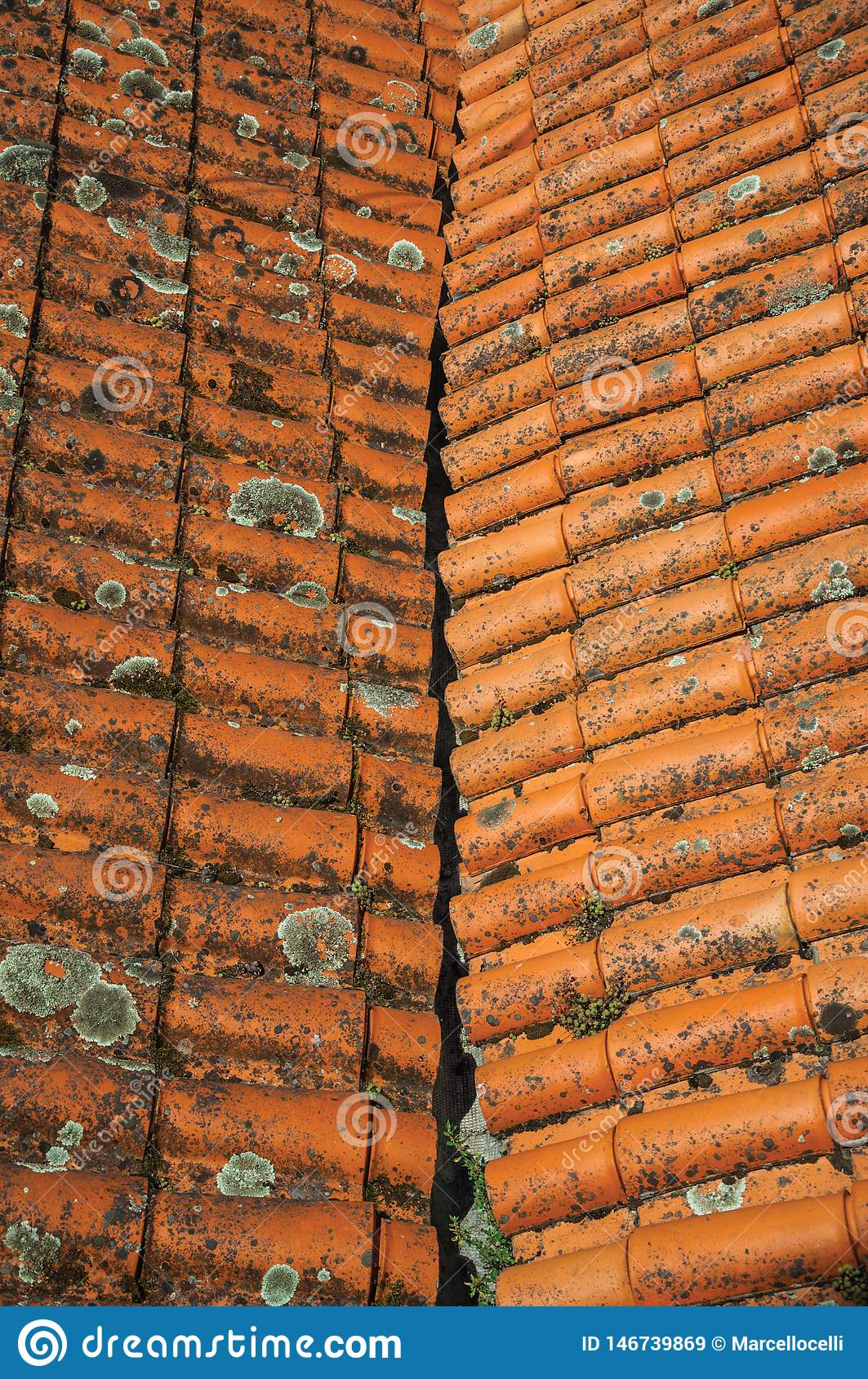Shingles on roof covered by moss and lichens