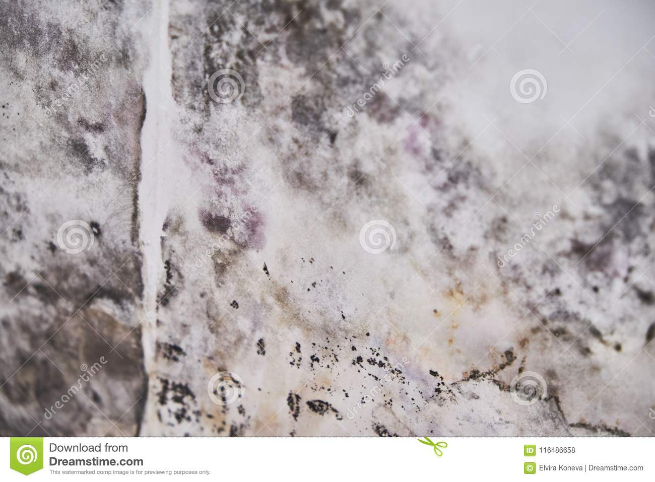 Black Mold Buildup In The Corner Of An Old House Development Of