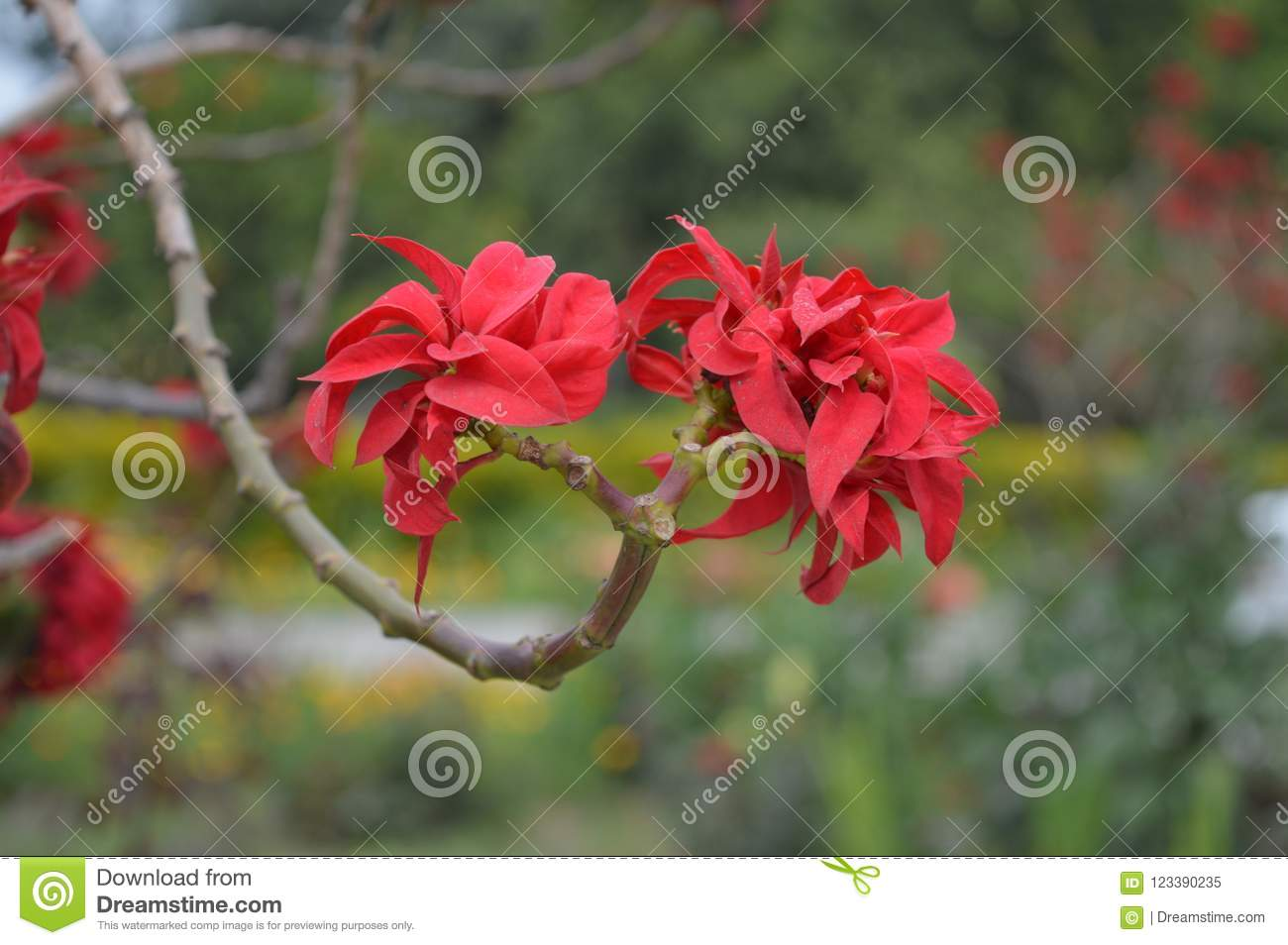 Pretty Red Flowers Stock Image Image Of Beautiful Flower 123390235