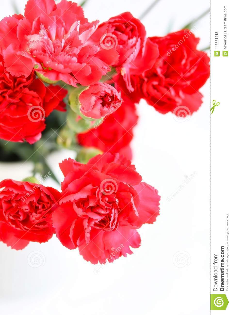 Bunch Of Beautiful Red Carnation Flowers Stock Photo Image Of