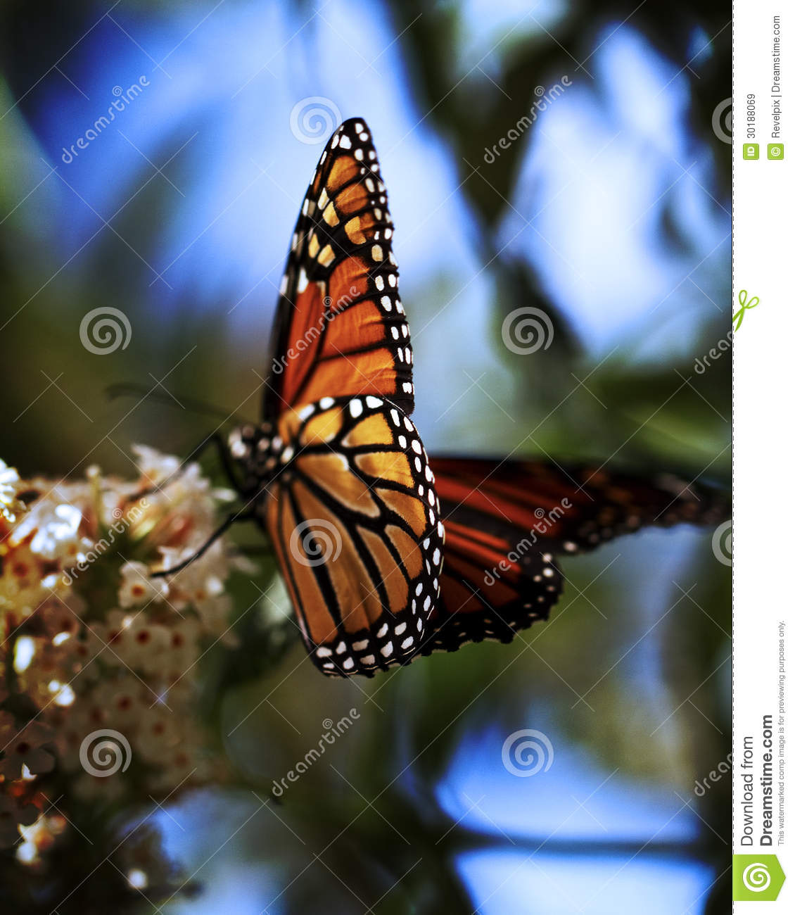 Butterfly Close Up Royalty Free Stock Images - Image: 30188069