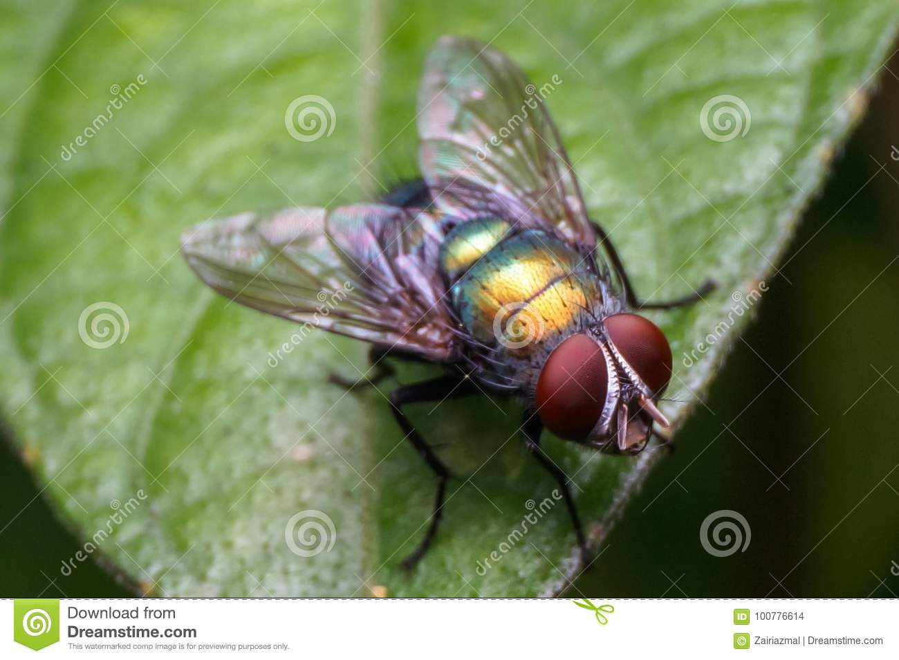 Close up shot of a common house fly standing on grass