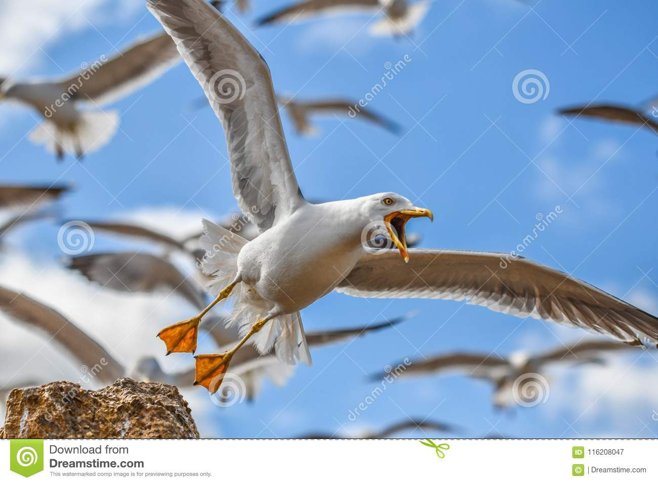 A close-up of a seagull bird with open beak flying with other birds on blue sky background.