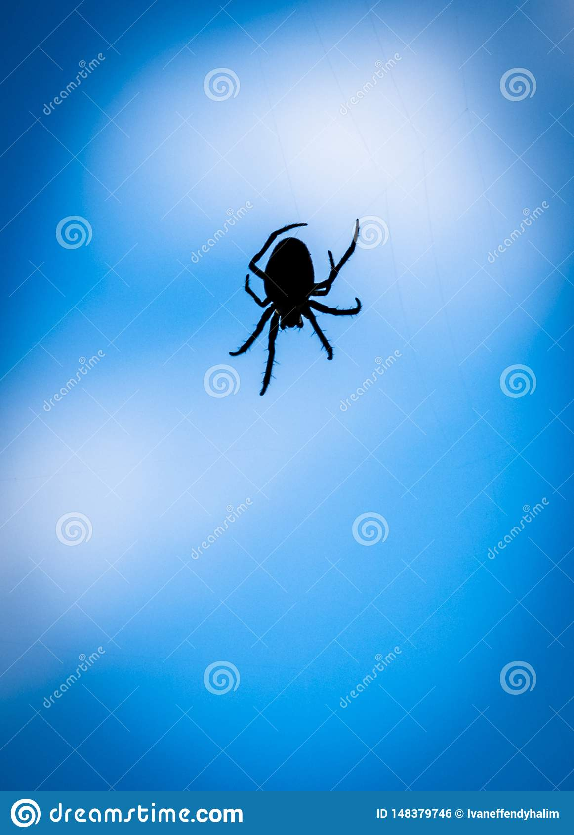 A close up silhouette of a spider with blue background