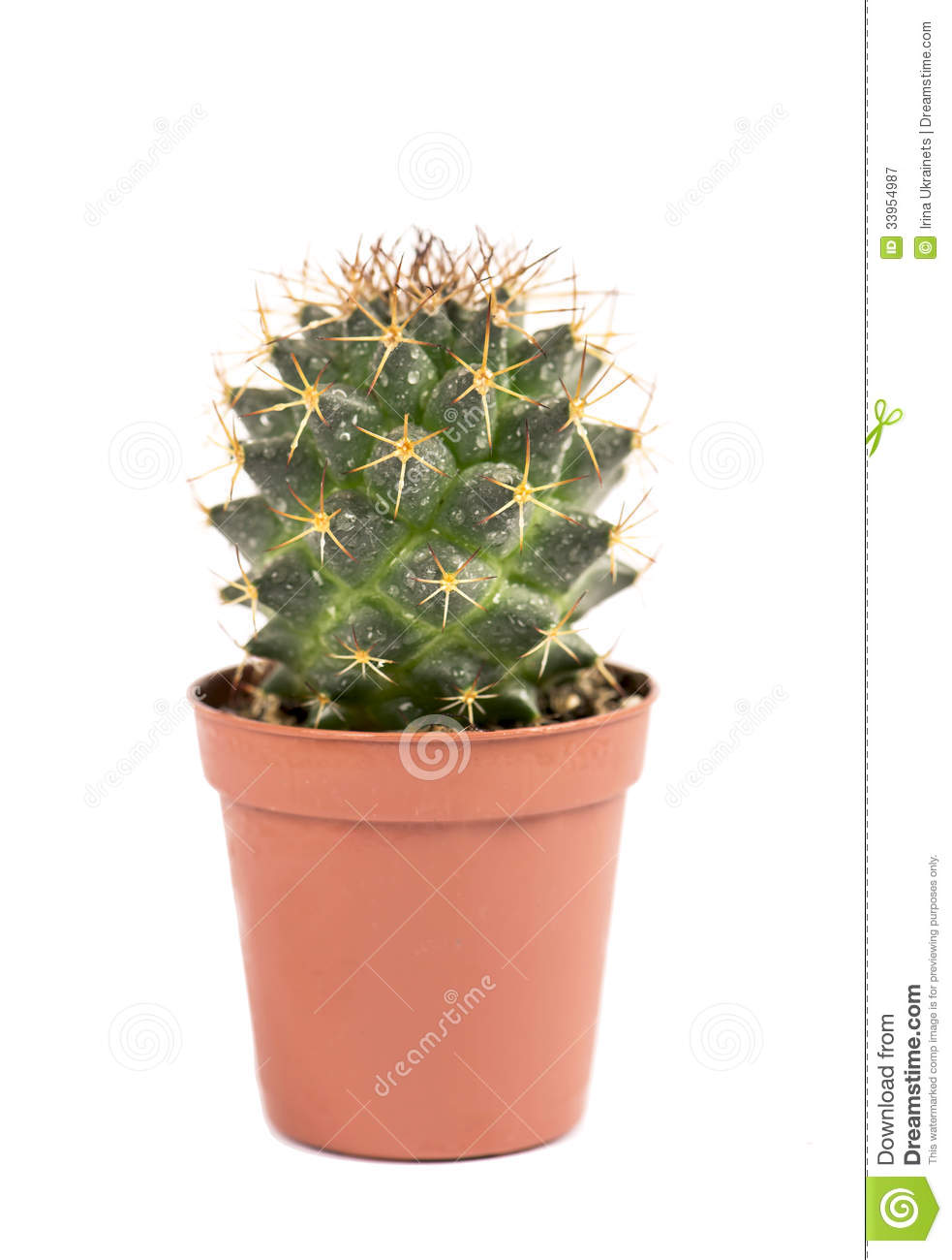 A cactus is a plant that grows where the soil is dry and rocky—most usually in the desert. A cactus doesn't have leaves like other plants do. Some are thin and very, very tall, and others are short and round like a ball a very spikey ball. There are even cacti that look like bushes and some that look like ping pong paddles.