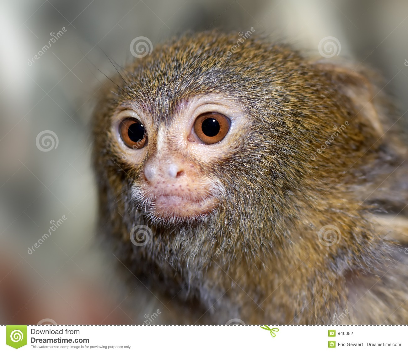 Close-up of a small monkey